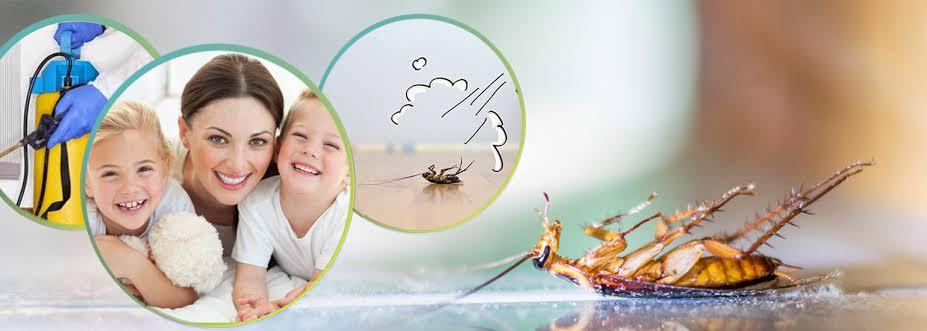 شركة ابادة حشرات فى مصر