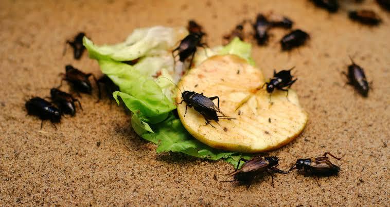 شركة رش الحشرات فى القاهرة