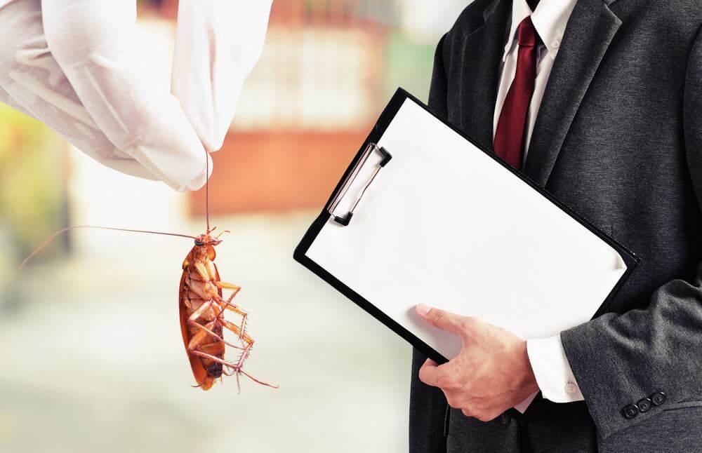 ارخص شركة ابادة حشرات فى مصر