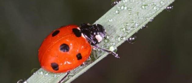 شركة مكافحة الحشرات الزمالك