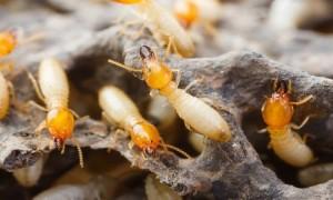شركة مكافحة الحشرات المعادي
