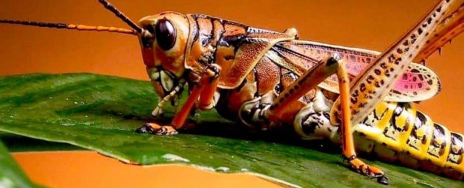 شركة مكافحة الحشرات المنيل
