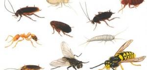 شركة مكافحة الحشرات المهندسين