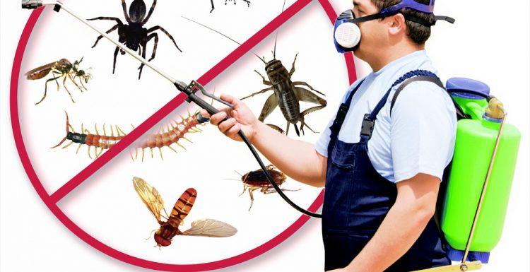 شركة مكافحة الحشرات جاردن سيتي