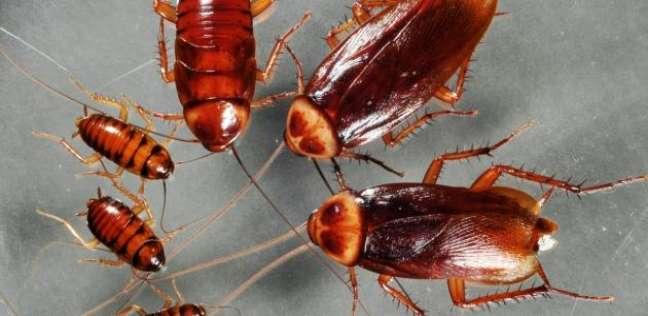 شركة مكافحة حشرات في اكتوبر