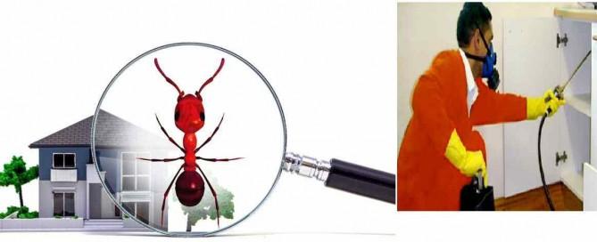 شركة مكافحة حشرات في فيصل